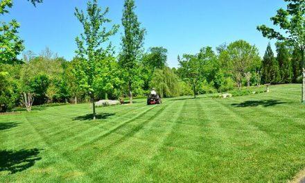 Gras maaien bij warm weer en het gras groen houden