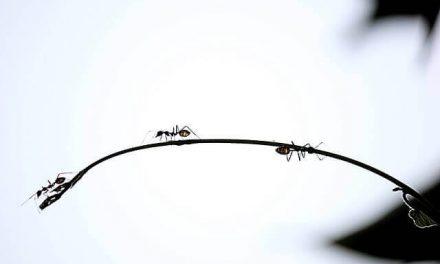 Hoe kom je van mieren in huis af?