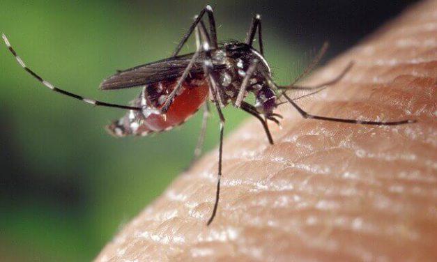 4 tips om muggen buiten weg te houden