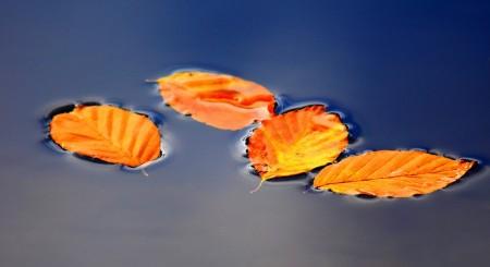 bladeren vijver