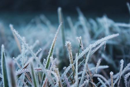 gras winterklaar