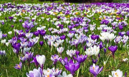Geef jouw tuin een voorjaarsbeurt!