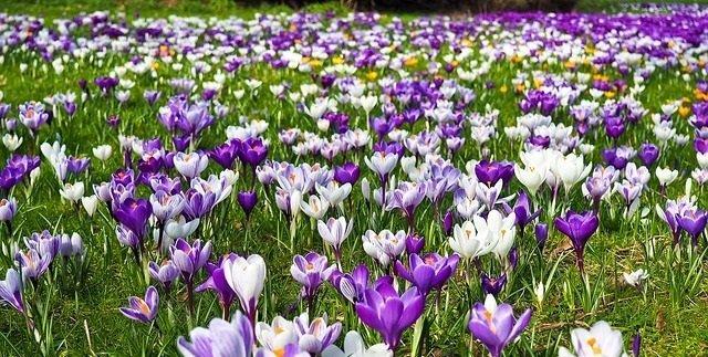 voorjaarsbeurt