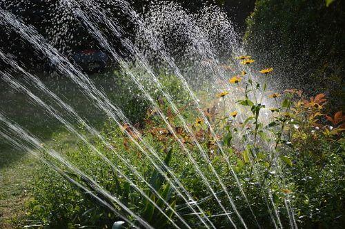 Planten water geven met warm weer, wanneer en hoeveel?
