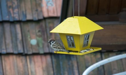 Kies het beste vogelvoederhuisje