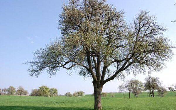 Alles wat je moet weten over hoogstam fruitbomen