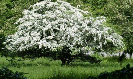 Alles wat je moet weten over laagstam fruitbomen