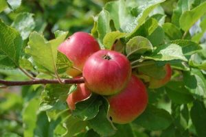 zoeter fruit zon
