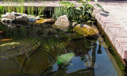 Een goede vijverpomp voor een gezonde vijver