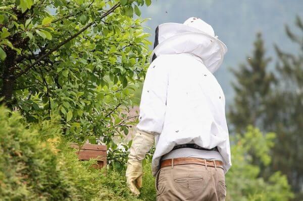 beschermende kleding wespennest
