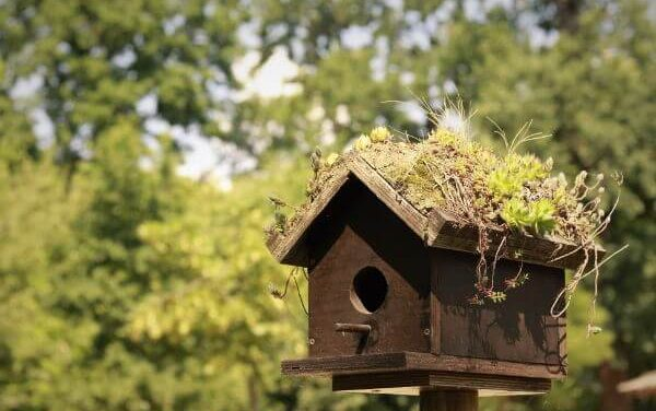 Een vogelhuisje in je tuin? Alles over vogelhuisjes