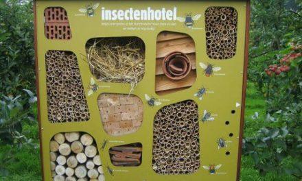 Een insectenhotel in je tuin? Dit moet je weten
