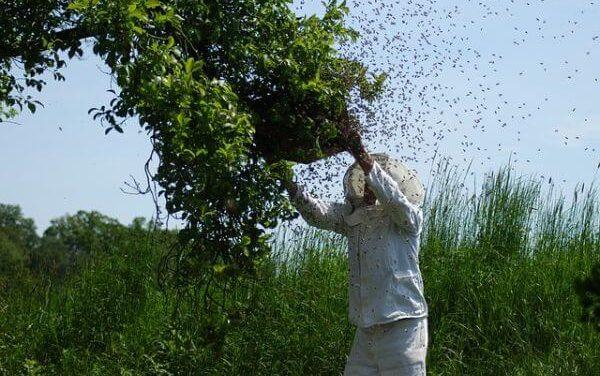 Zelf een wespennest verwijderen, hoe doe je dat?
