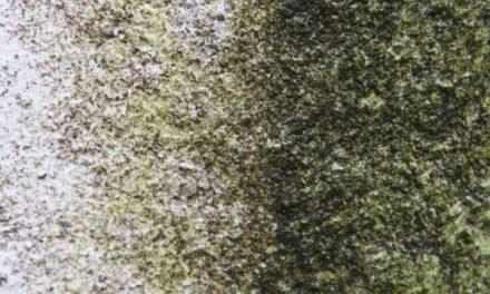 Groene aanslag tegels verwijderen doe je zo