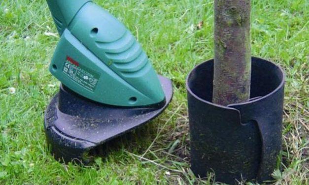 Een boomstam beschermen, hoe doe je dat het beste?