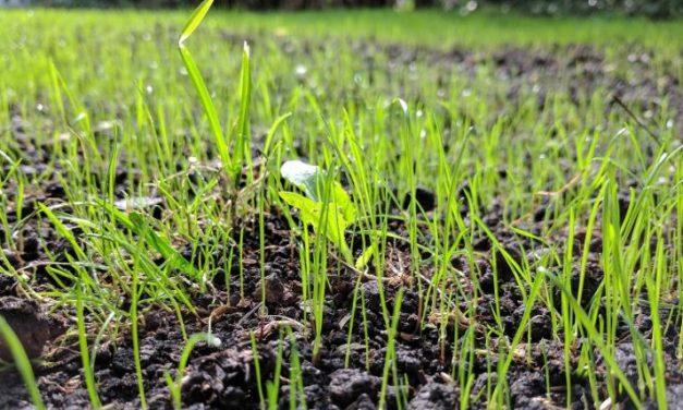 Je eigen gazon aanleggen met graszaad