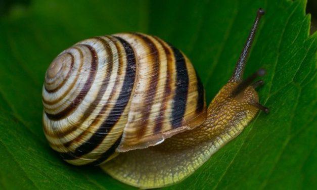 Slakken bestrijden in je tuin doe je zo
