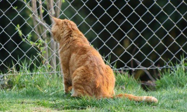 De beste tips om katten uit je tuin te houden